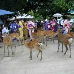 Na Osaka ging ik naar Nara, waar de herten tussen de mensen rondliepen in het oude deel van de stad.